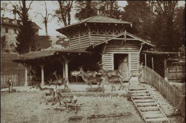 Tierpark-Dählhölzli-1873