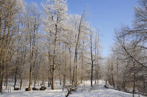 Wisentwald - Dählhölzli und BärenPark