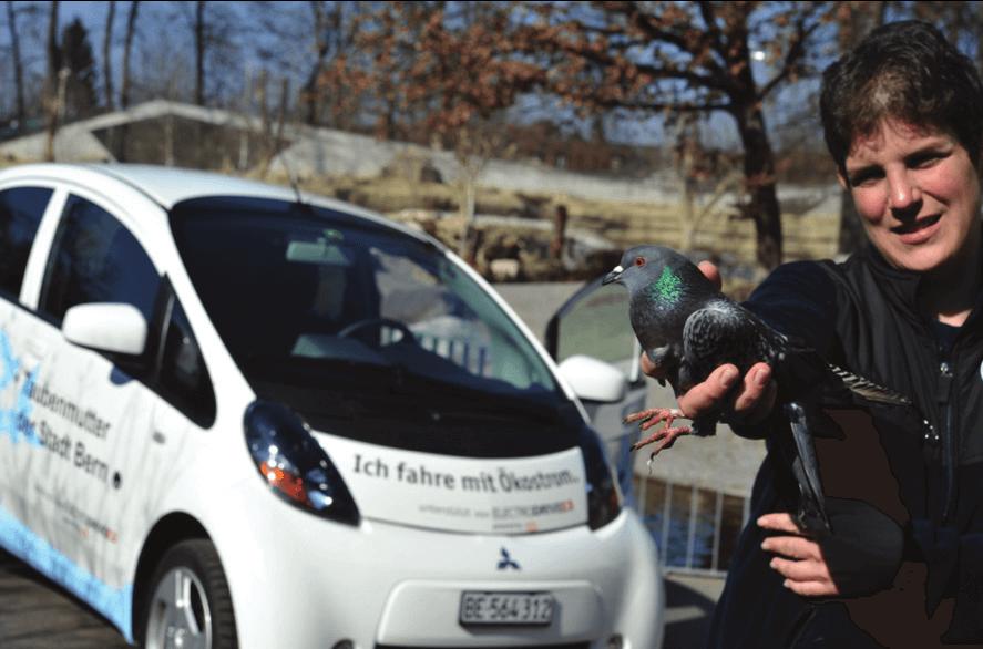Taubenmutter in Bern